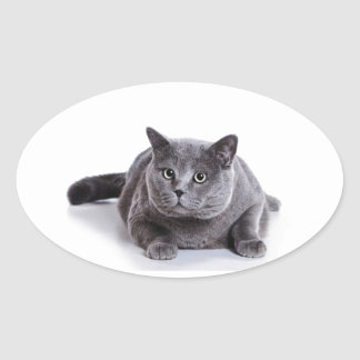 灰色猫 楕円形シール