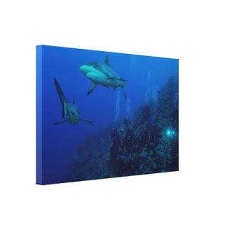 灰色礁の鮫のキャンバスプリント キャンバスプリント