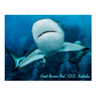 灰色礁の鮫のグレート・バリア・リーフの珊瑚海 ポストカード