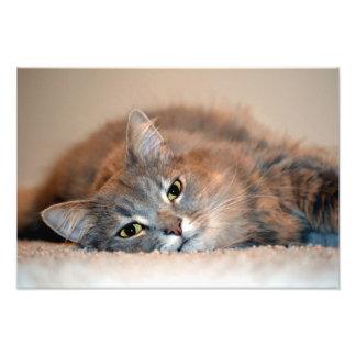 灰色、タンのShirleyテイラー著白い長い髪猫 フォトプリント