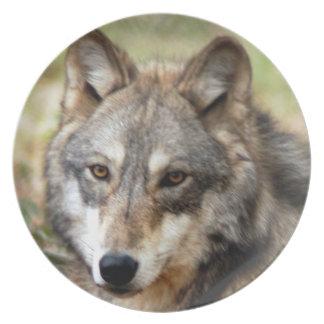 灰色wolf10x10 プレート