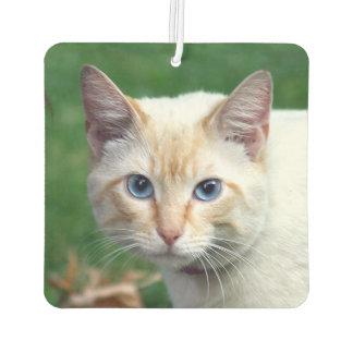 炎ポイントシャム猫の顔 カーエアーフレッシュナー