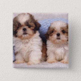 点検された毛布の下のシーズー(犬)のTzuの子犬 缶バッジ