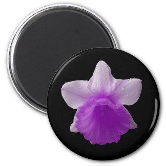点滴注入のラッパスイセンの紫色の磁石 マグネット