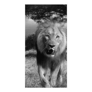 無謀なライオン カード
