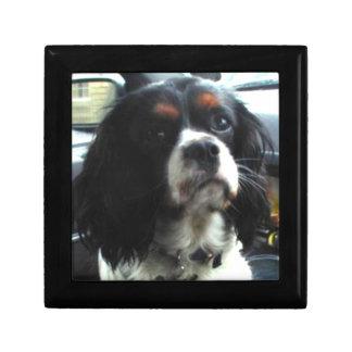 無頓着なチャールズ王スパニエル犬のギフト用の箱 ギフトボックス