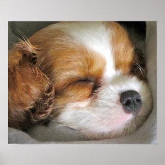 無頓着なチャールズ王スパニエル犬の子犬ポスター ポスター