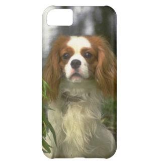 無頓着なチャールズ王スパニエル犬犬の写真のiPhone 5 iPhone5Cケース