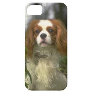 無頓着なチャールズ王スパニエル犬犬の写真のiPhone 5 iPhone SE/5/5s ケース