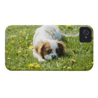 無頓着なチャールズ王スパニエル犬 Case-Mate iPhone 4 ケース
