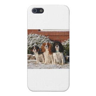 無頓着なチャールズ王スパニエル犬 iPhone 5 カバー