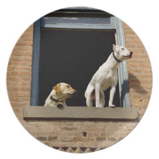 煉瓦の開いているウィンドウの犬の低い角度眺め プレート