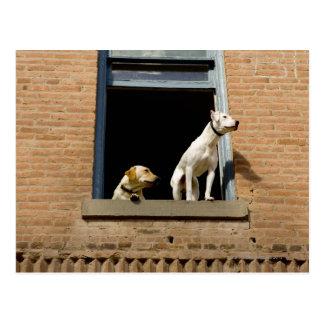 煉瓦の開いているウィンドウの犬の低い角度眺め ポストカード