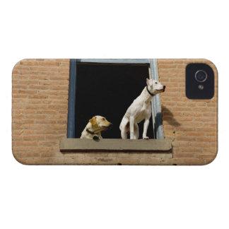 煉瓦の開いているウィンドウの犬の低い角度眺め Case-Mate iPhone 4 ケース