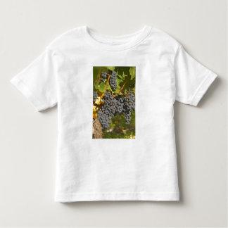 熟したメルローのブドウの束を持つつる植物-館 トドラーTシャツ