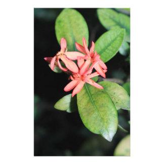 熱帯エキゾチックな珊瑚の花、Kewの文房具 便箋