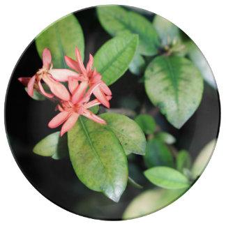 熱帯エキゾチックな珊瑚の花、Kewの磁器皿 磁器プレート