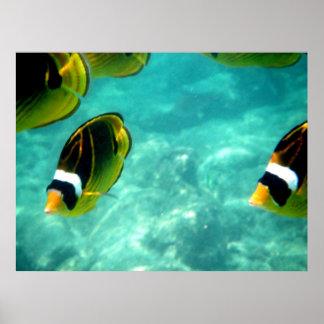 熱帯ハワイの魚ポスター プリント
