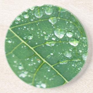 熱帯パパイヤの葉の雨低下 コースター