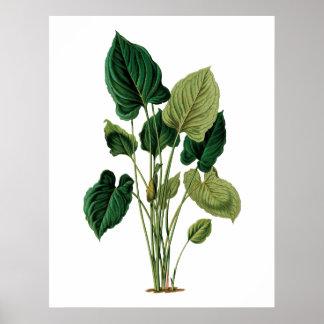 熱帯大きい葉の植物のプリントのphilodendron ポスター