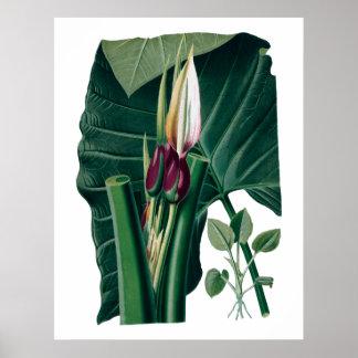 熱帯大きい葉の植物のプリント ポスター