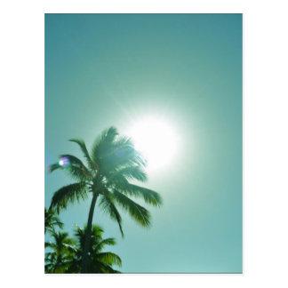 熱帯日曜日 ポストカード