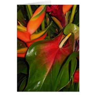 熱帯植物 カード