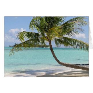熱帯楽園 カード