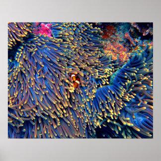 熱帯海の珊瑚 ポスター