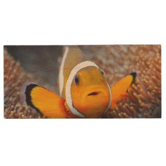 熱帯礁の魚- Clownfish ウッドUSBフラッシュドライブ
