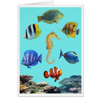 熱帯礁カード カード