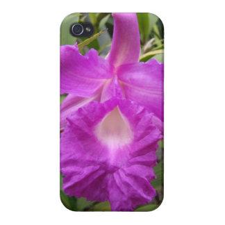熱帯紫色のOrquidの電話箱 iPhone 4/4Sケース