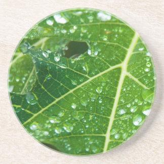 熱帯緑のパパイヤの葉の雨低下 コースター