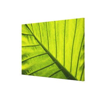 熱帯群葉の緑によって張りめぐらされる葉 キャンバスプリント