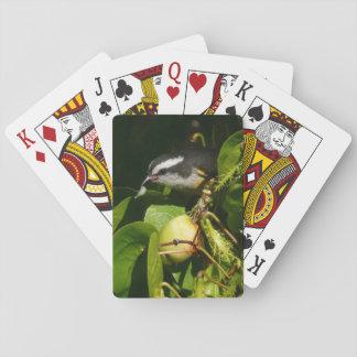 熱帯自然の写真撮影を食べているBananaquitの鳥 トランプ