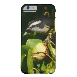 熱帯自然の写真撮影を食べているBananaquitの鳥 Barely There iPhone 6 ケース