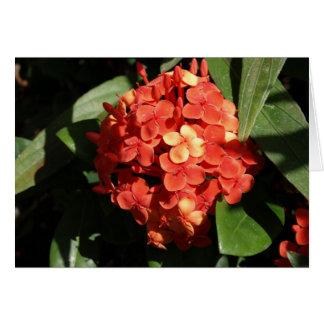 熱帯花のメッセージカード カード