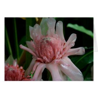 熱帯花 カード