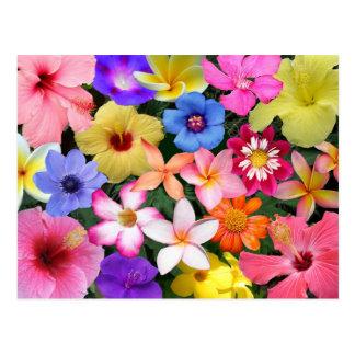 熱帯花 ポストカード