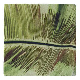 熱帯葉のマクロ打撃 トリベット
