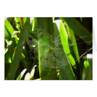 熱帯葉の緑の自然のSpiderweb カード