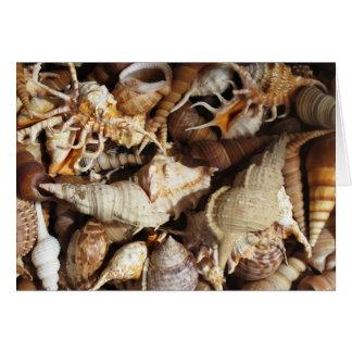 熱帯貝殻のクローズアップ カード