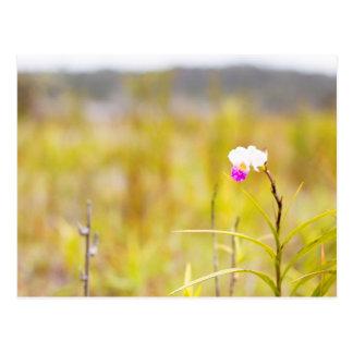 熱帯野生の蘭のプリント、ハワイ ポストカード