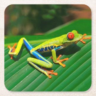 熱帯雨林の緑の目が赤いアマガエル スクエアペーパーコースター