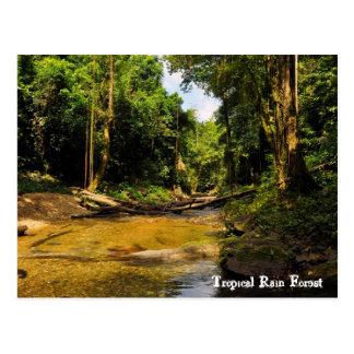 熱帯雨林 ポストカード