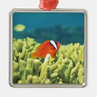 熱帯魚と満ちる珊瑚礁 メタルオーナメント