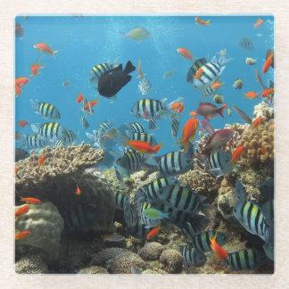 熱帯魚の無秩序 ガラスコースター