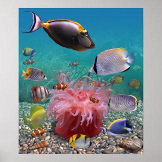熱帯魚ポスター ポスター