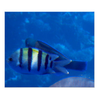 熱帯魚3 プリント
