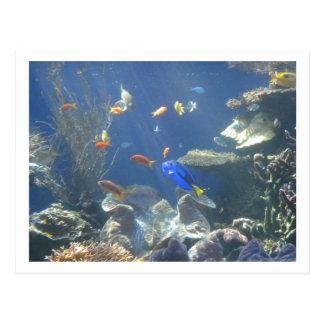 熱帯魚 ポストカード